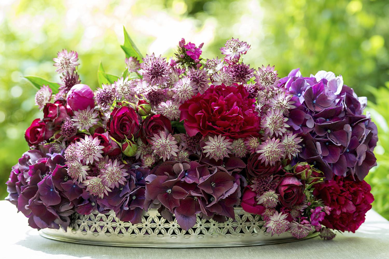 Themenwelt Flora: Blumenbilder, Pflanzen und Gärten